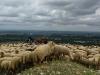 moutons_DxO