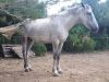 cheval-2_1200