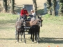 Concours complet la Roques sur Pernes 2010